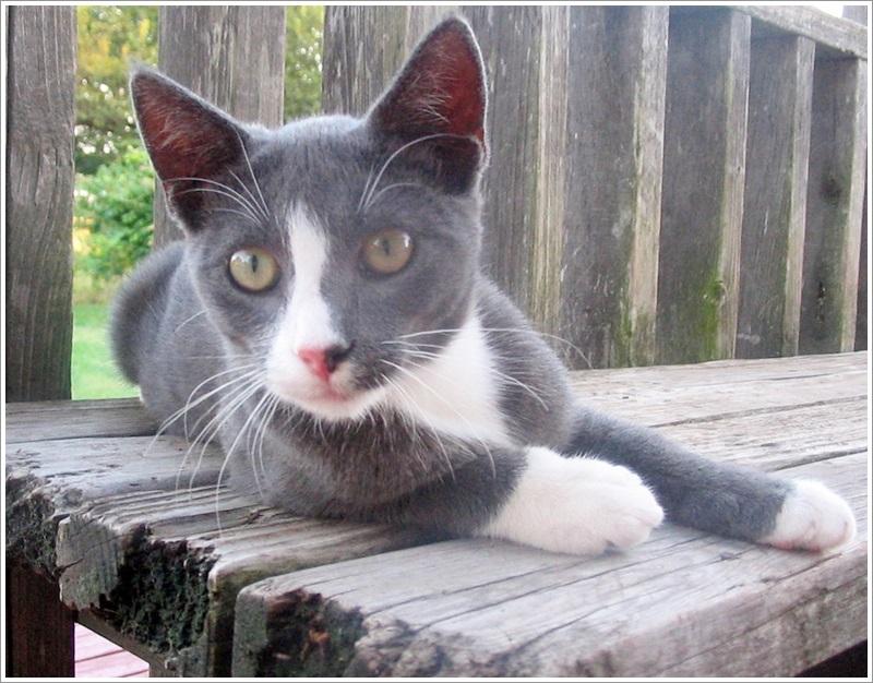 josh-cat