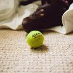 tennis-dog